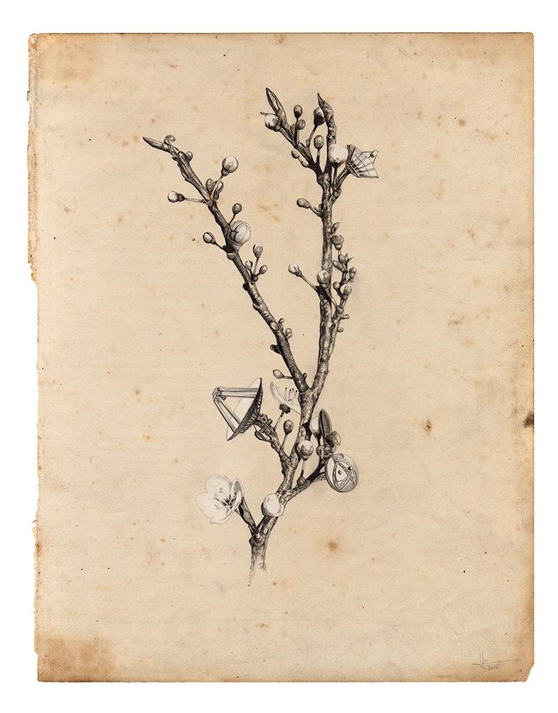 arborescopeII-web